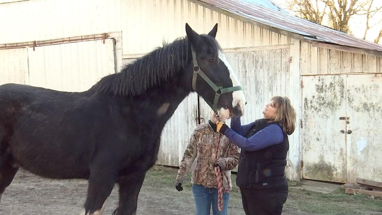 Windsor with his owner Karen McInnis. (KPTV)