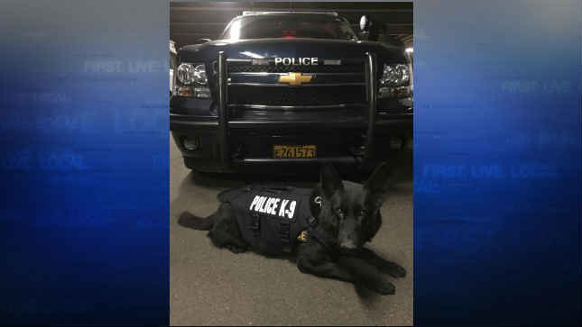 PPB K9 Marko wearing one of the bullet and stab protective vests. (Courtesy: Portland Police Bureau)