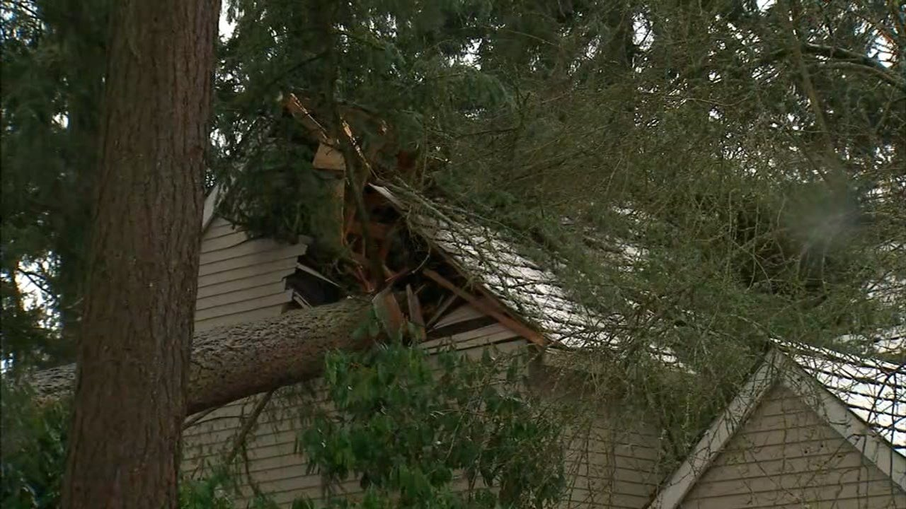 Tree into home in Lake Oswego on Sunday. (KPTV)