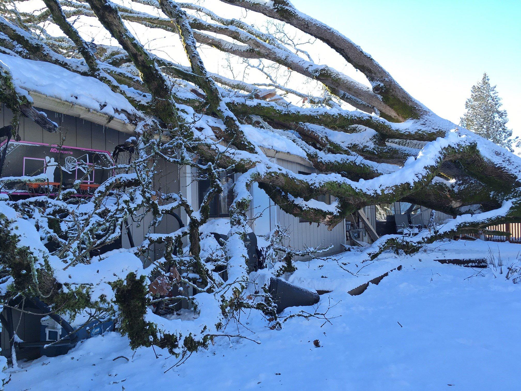 The oak tree that came crashing onto their home. (KPTV)