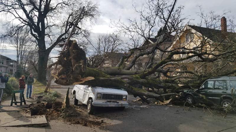 Tree down in southeast Portland. (KPTV)