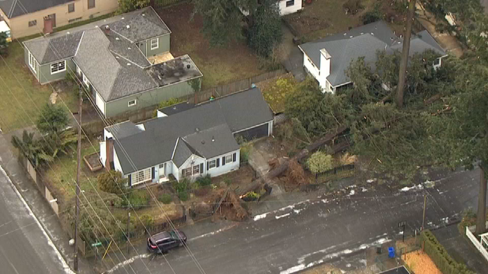 AIR 12 over downed trees