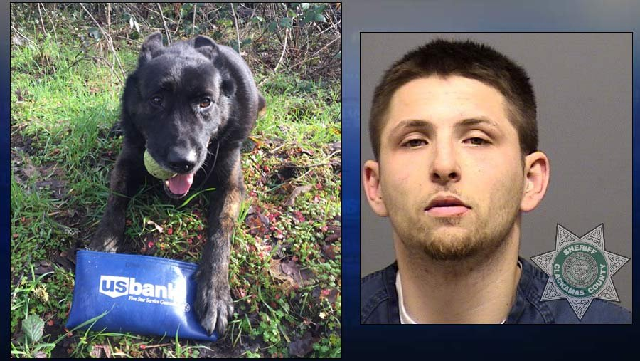 Clackamas County Sheriff's Office K-9 Spencer and robbery suspect Jacob Ryan Moses. (Photos: Oregon City Police Department)
