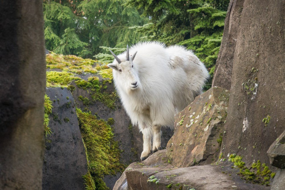 Courtesy Oregon Zoo.