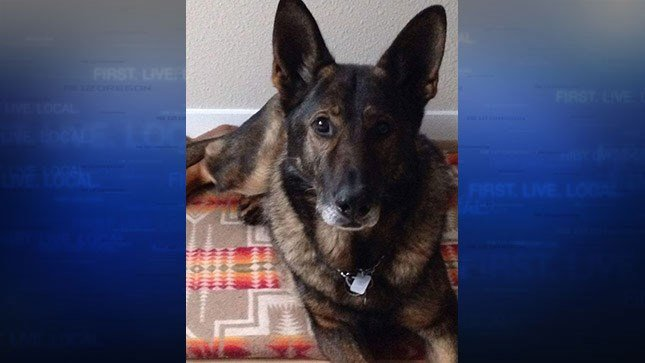 Retired K-9 Zurg. Photo credit Washington County Sheriff's Office.