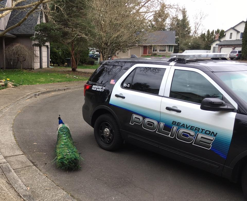 Photo credit: Beaverton Police Department
