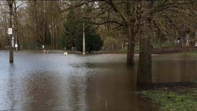 Part of Sellwood Park under water Monday. (KPTV)