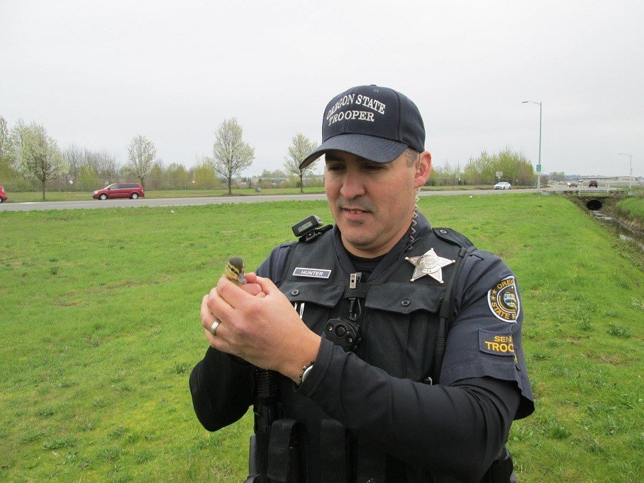 Senior Trooper Hunter helps rescue ducklings from storm drain (Courtesy: OSP)