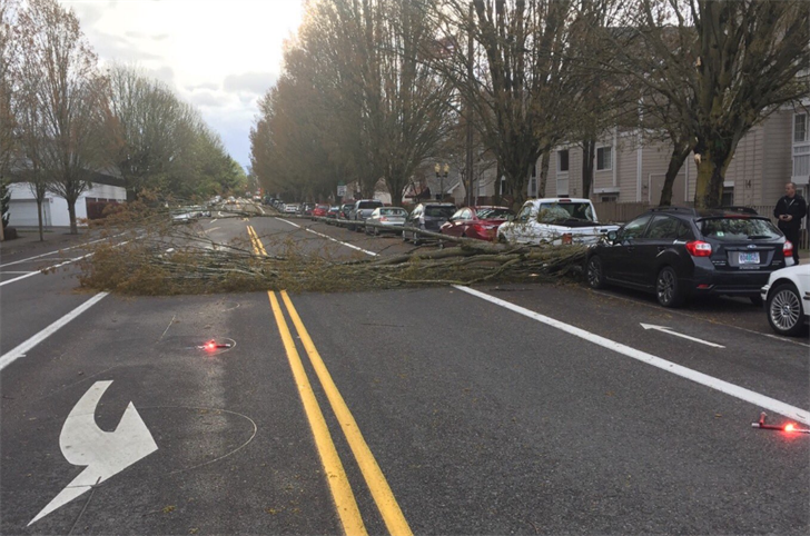 Tree falls in NE Portland (Courtesy: PPB)