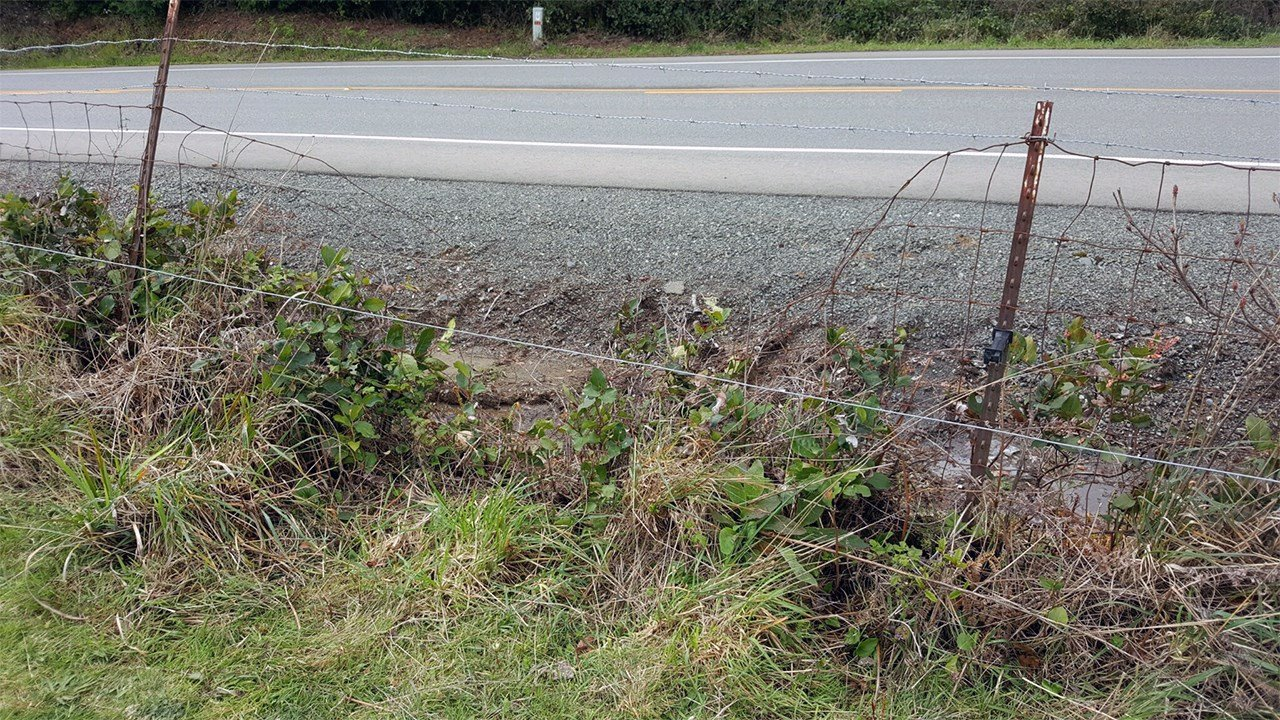 OSP investigators said the suspect cut this fence just off Highway 101 to get access to the two calves before dragging one of them back through after shooting the animal. (Oregon State Police)