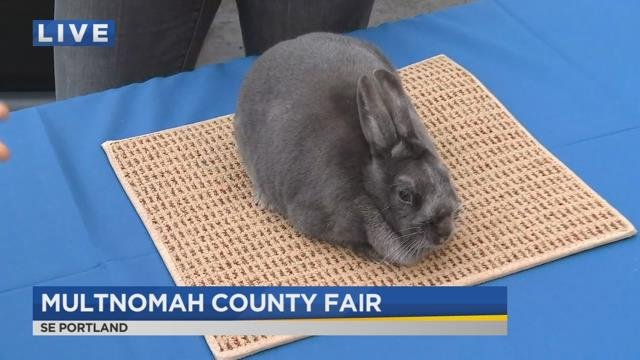 On the Go with Joe at Multnomah County Fair
