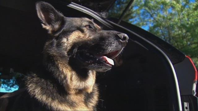 Hot weather poses challenges for search and rescue K-9 teams