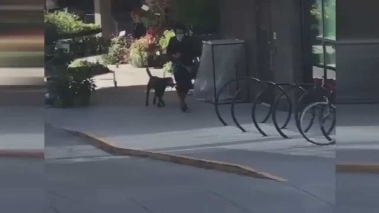 A Good Samaritan recorded video of someone stealing the dog outside the New Seasons Market Wednesday morning. (Courtesy: Danny O'Connor)