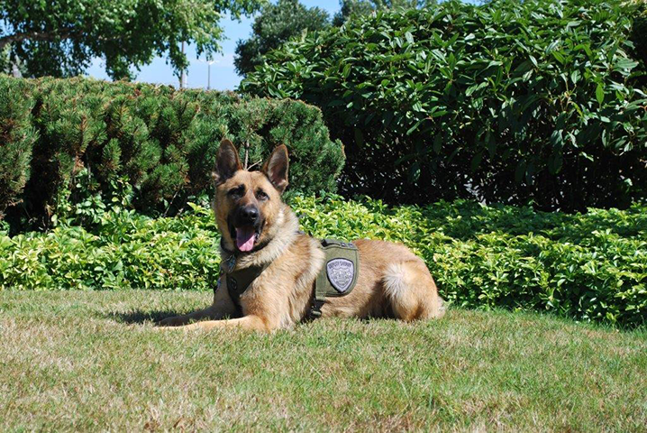 Clark County K9 Apollo (Photo: Clark County Sheriff's Office)