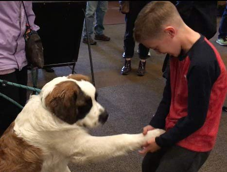 Bruno making friends with a young guest from Hawaii at Timberline Lodge (KPTV)