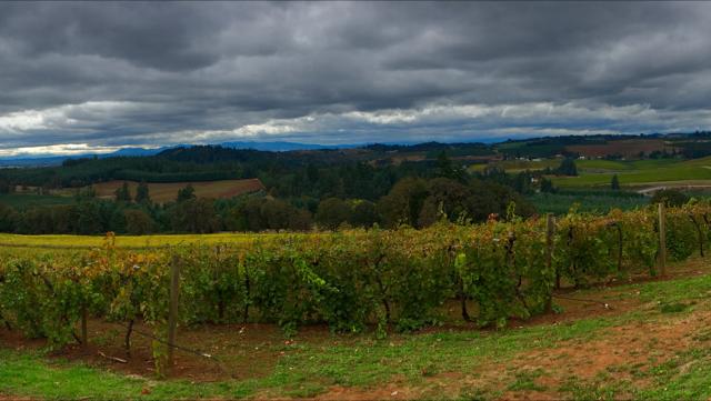 Willamette Valley Vineyards in Turner, Oregon.