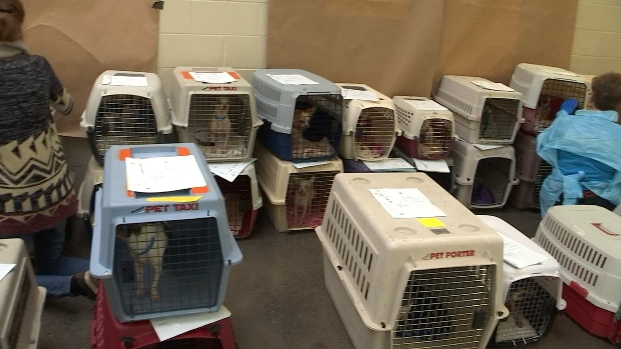 Dogs living in filthy conditions surrendered to Humane Society of Missouri