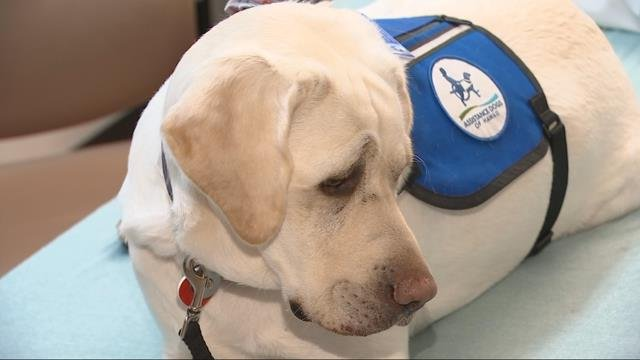 Golden lab comforts patients at the Children's Emergency Room at Providence St. Vincent