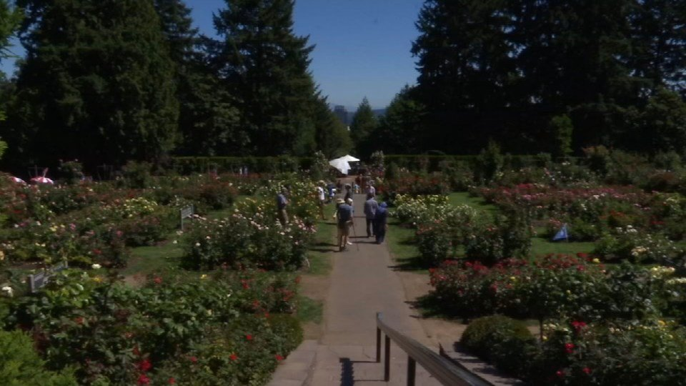 International Rose Test Garden at Washington Park (FOX 12 Oregon/file photo)