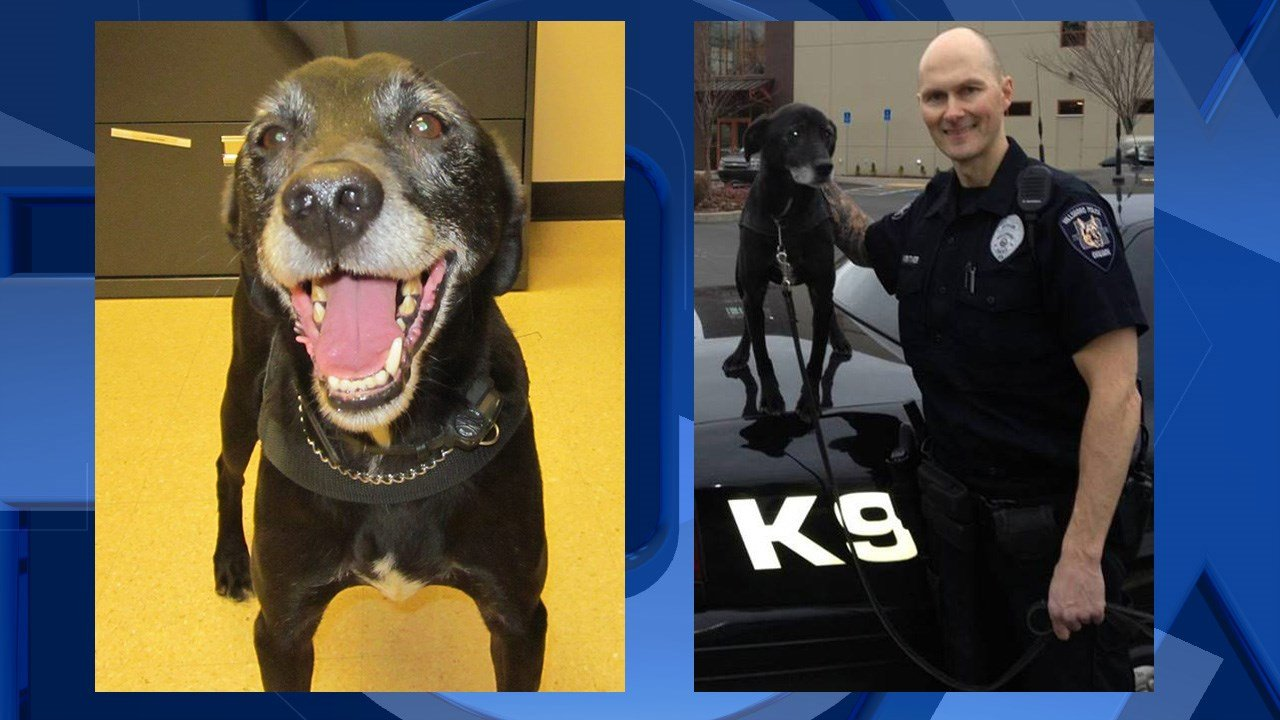 K-9 Riley, courtesy Hillsboro PD