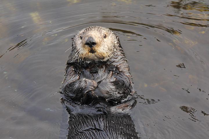 (Courtesy: Oregon Coast Aquarium)