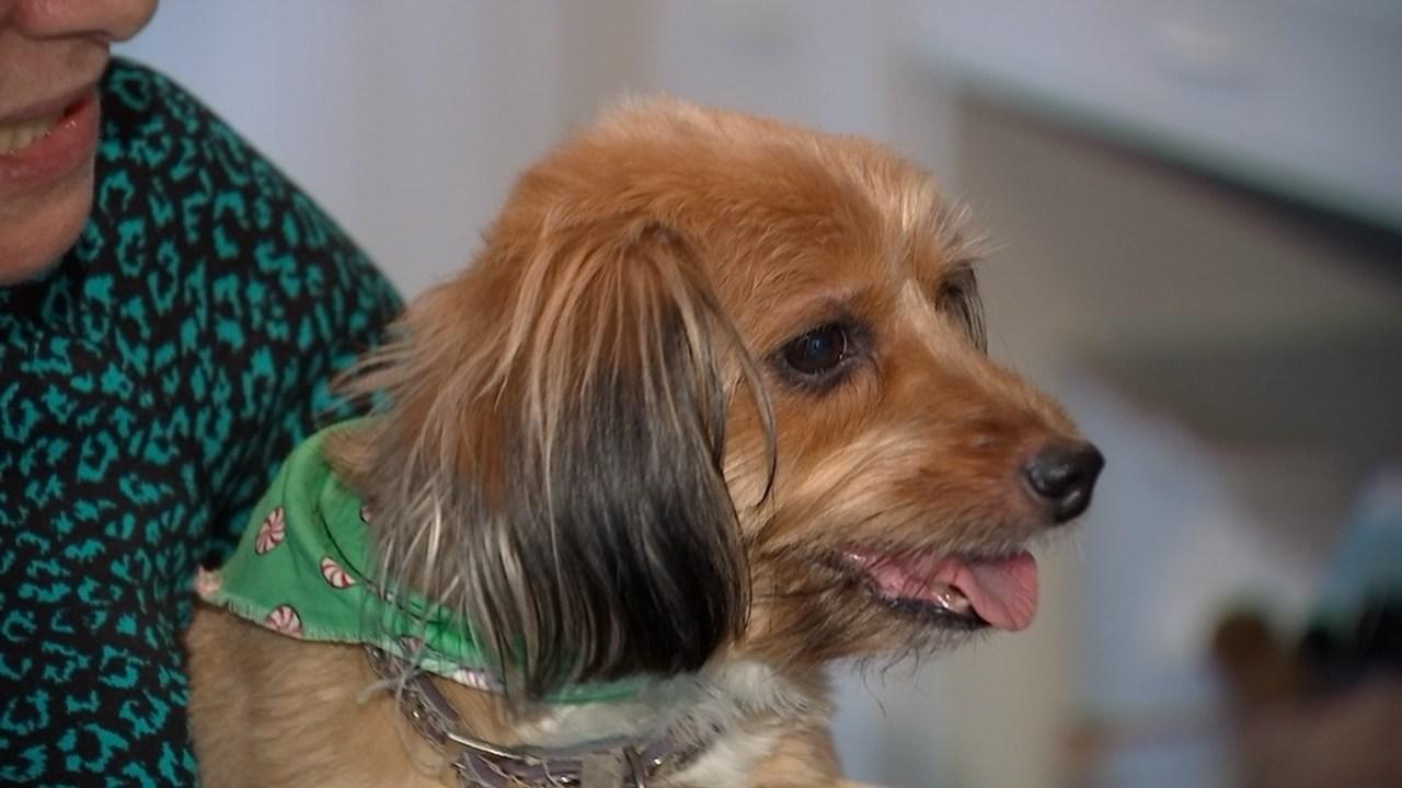 Oregon Gas Prices >> Lake Oswego companion dog missing for one week found safe ...