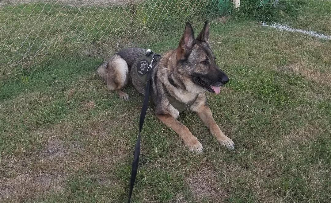 K9 Bonni (Lincoln County Sheriff's Office