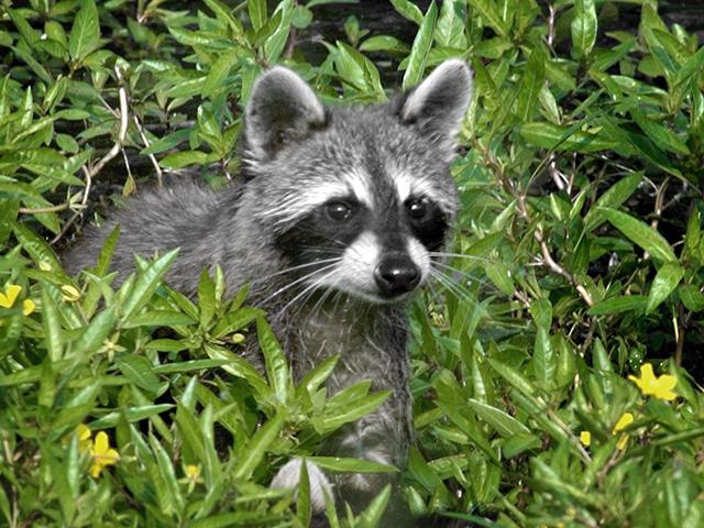 (AP images/ Swan Lake National Wildlife Refuge)