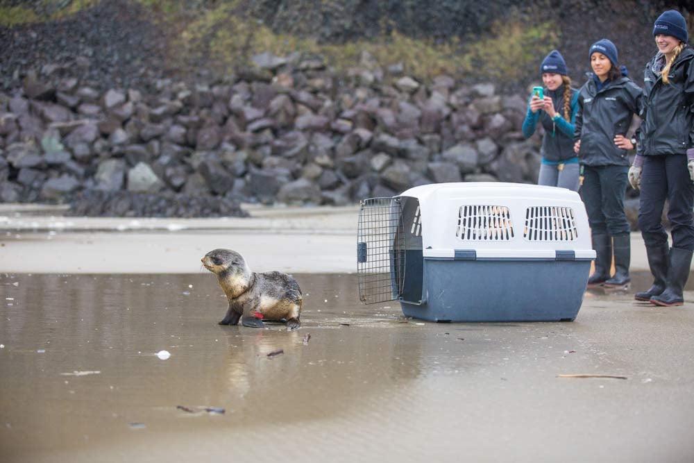 Photo: Oregon Coast Aquarium