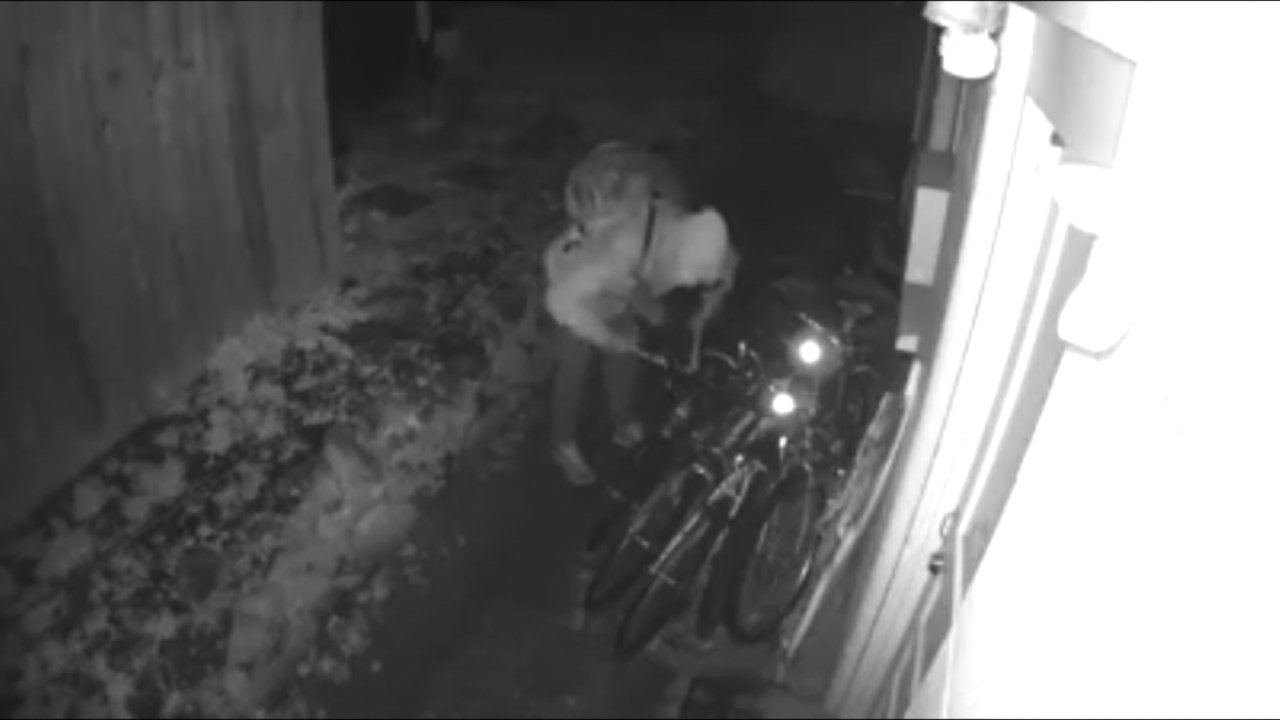 Surveillance image of the suspect stealing the bike (Courtesy: Amber Varner)