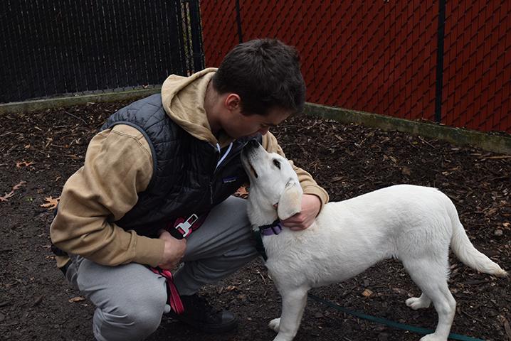 Humane Society Portland Oregon Dogs