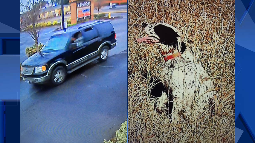 Surveillance image of the suspect's vehicle, and image of the dog that was stolen (Courtesy: Clark County Sheriff's Office)
