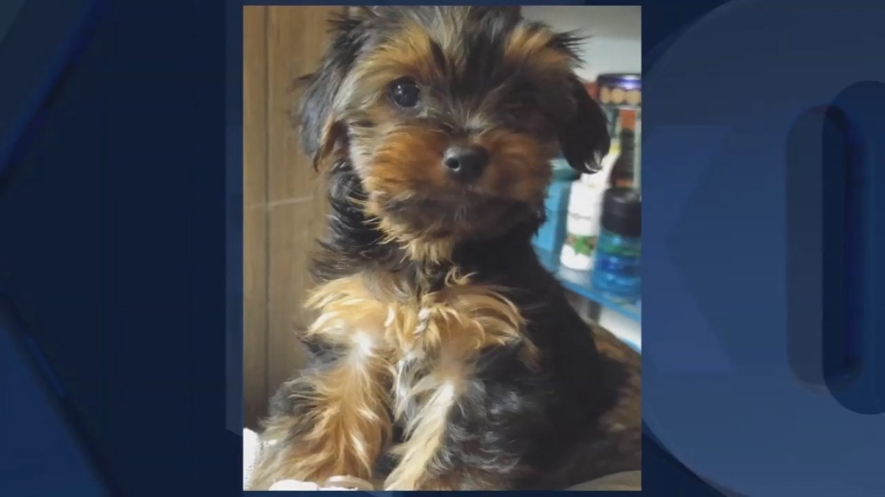 Jedi the puppy (Photo released by Washington County Sheriff's Office)