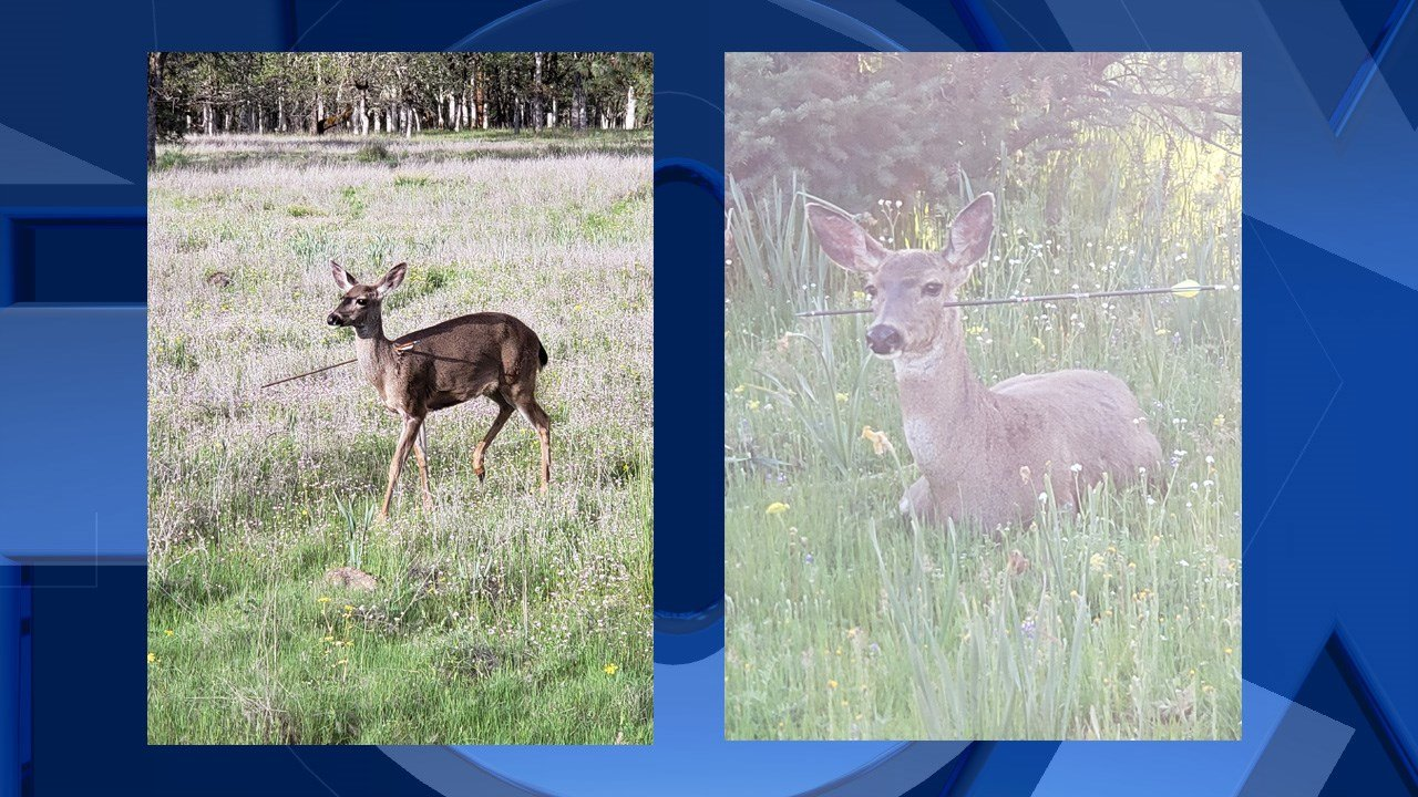 Trooper finds living deer with arrows through head, body