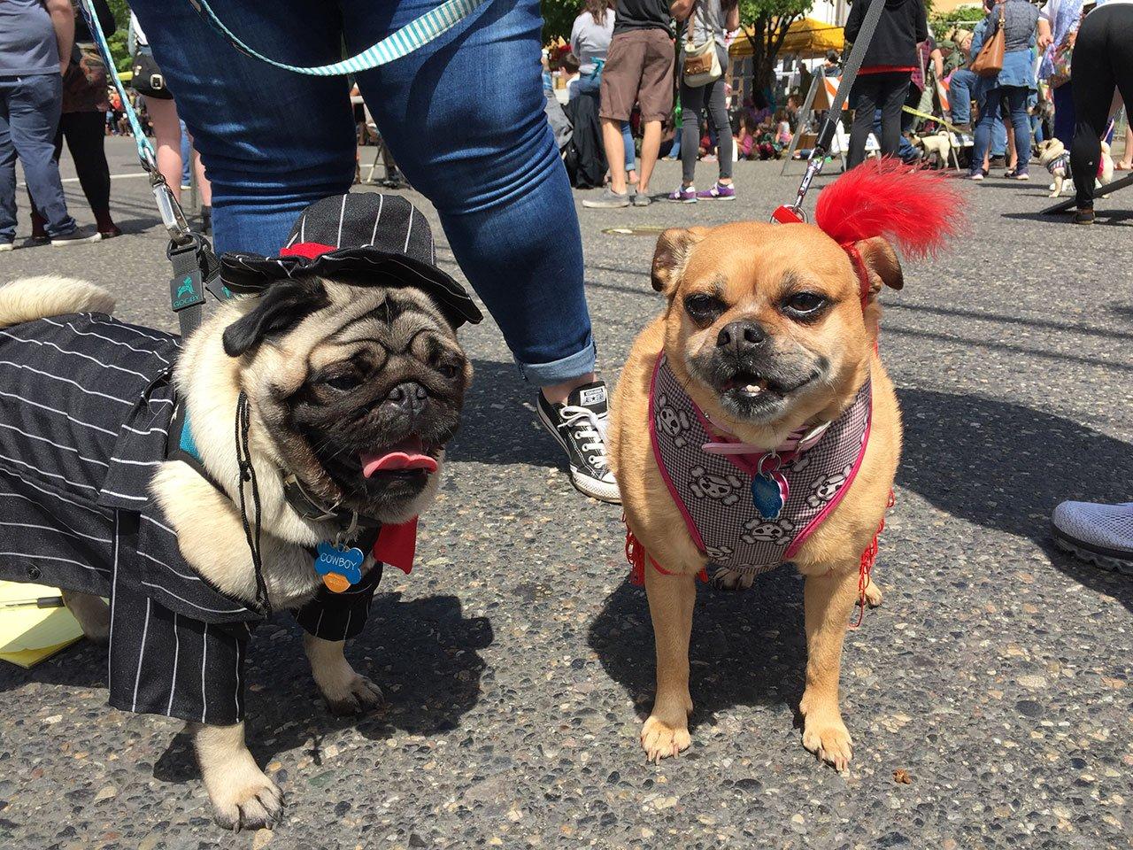 (Photo courtesy: Oregon Humane Society)