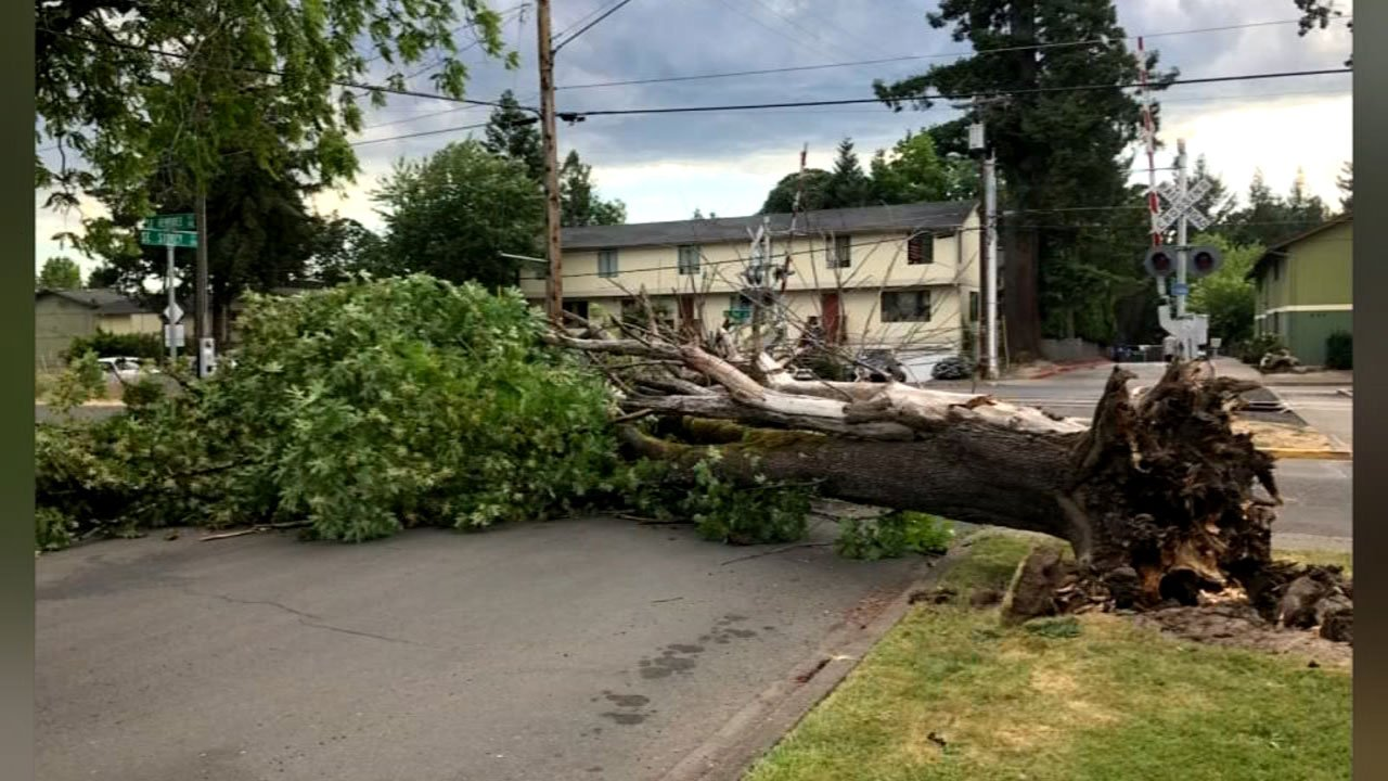 Downed tree in McMinnville (KPTV viewer photo)