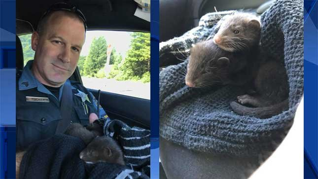 Photos provided by Oregon State Patrol.