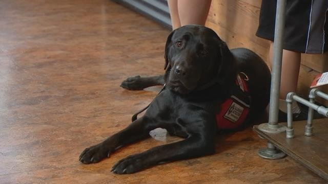 Service dog helps sniff out gluten for 6-year-old diagnosed with Celiac Disease