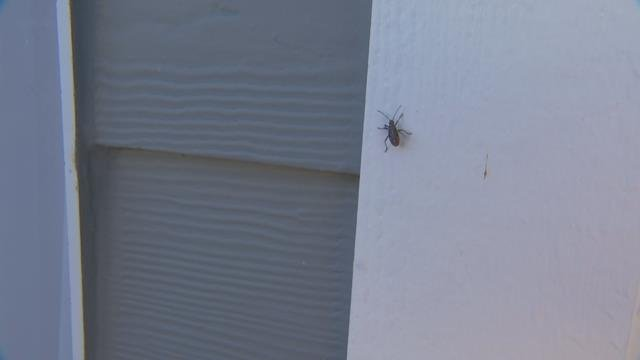 As temperatures rise, some pests find a way inside your home to avoid the heat