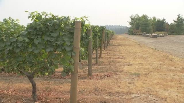 Air quality spurs concern in Oregon wine industry