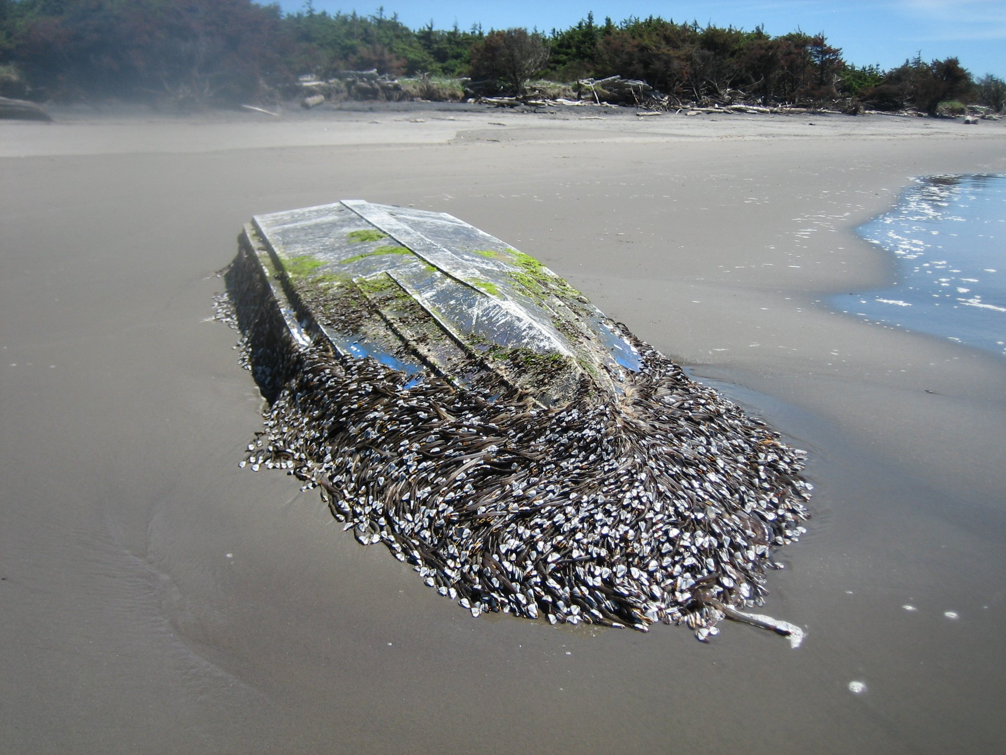 Photo: National Oceanic and Atmospheric Administration  / A boat that may be debris from the Japanese tsunami washed ashore in Ilwaco last week.