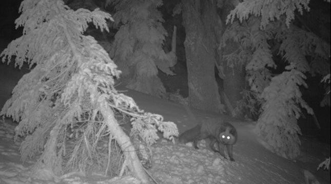 Photo: Cascadia Wild
