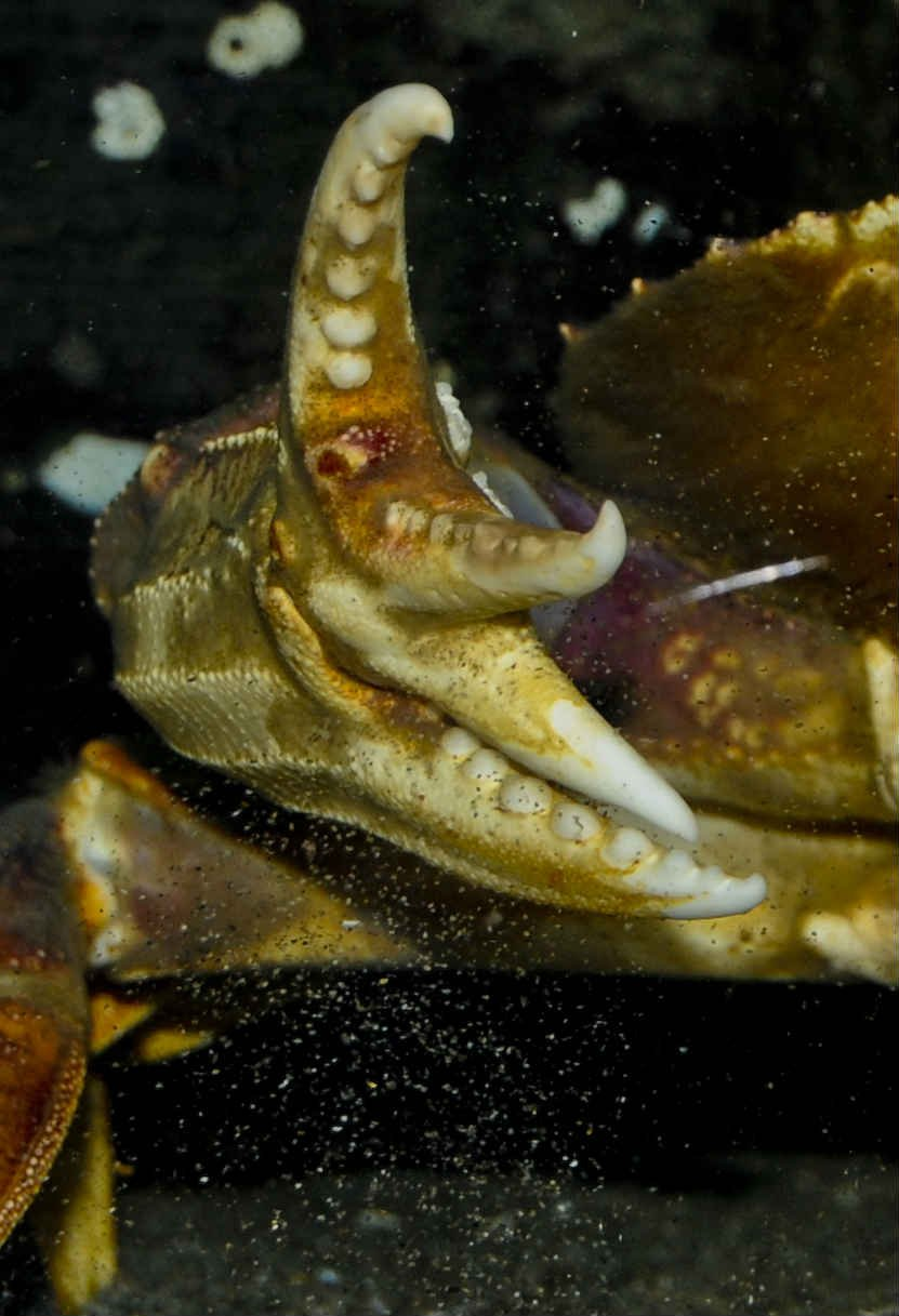 Tiffany Boothe/Seaside Aquarium