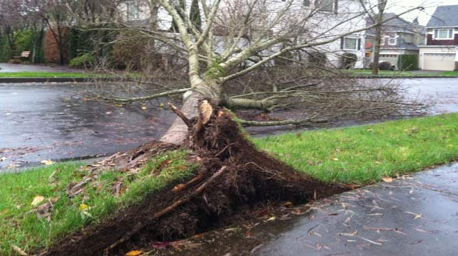Tree knocked down in Hillsboro