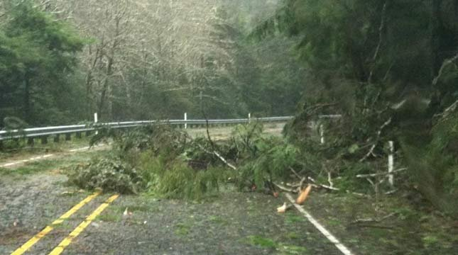 The storm toppled trees all over the Oregon coast Monday.