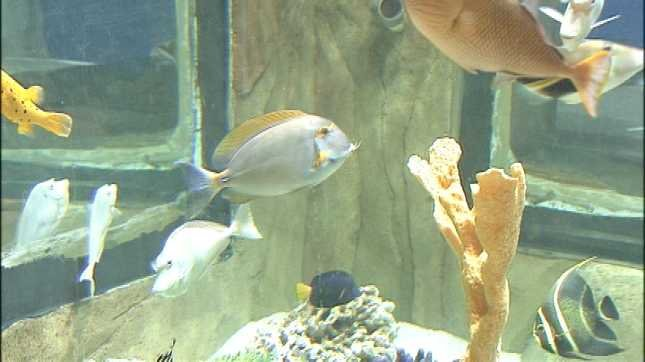 Portland Aquarium Opening This Week Kptv Fox 12