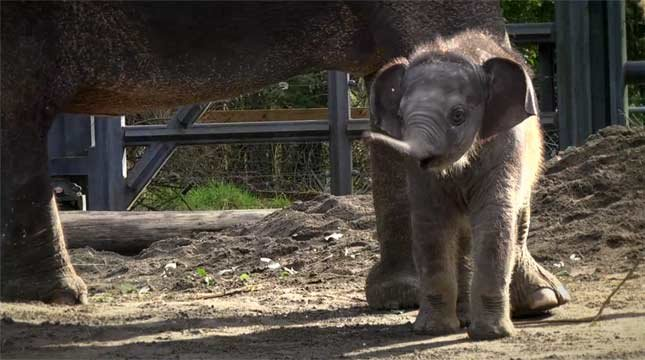 Photo: Oregon Zoo