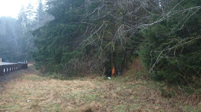 Crash scene near Naselle