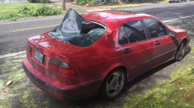 Tree hits car in southeast Portland