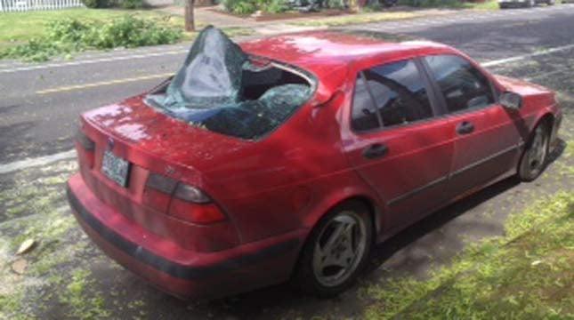 Tree hits car in southeast Portland